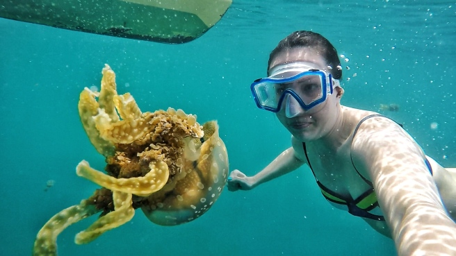 Trying to take a photo with the elusive but stunning Stingless Jellygfish at Tiktikan Lagoon.
